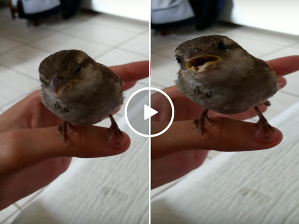 Bird is shocked by owner's incredible singing voice