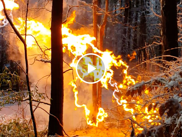 Fallen power line creates pulsing fire in tree (Video)