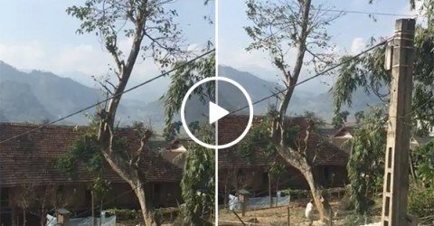 Lumberjack Cuts Tree and It Falls On His House