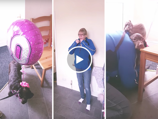 Women receives surprise puppy for her 40th birthday