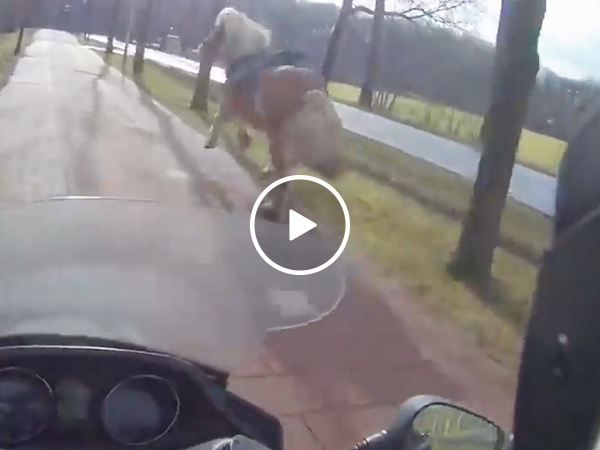 Scooter driver helps woman chase down loose horse (Video)