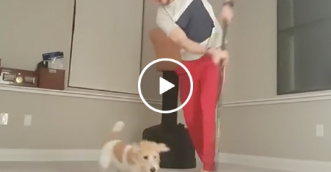 NHL Hockey Player Stick Handles A Ball Around His Dog