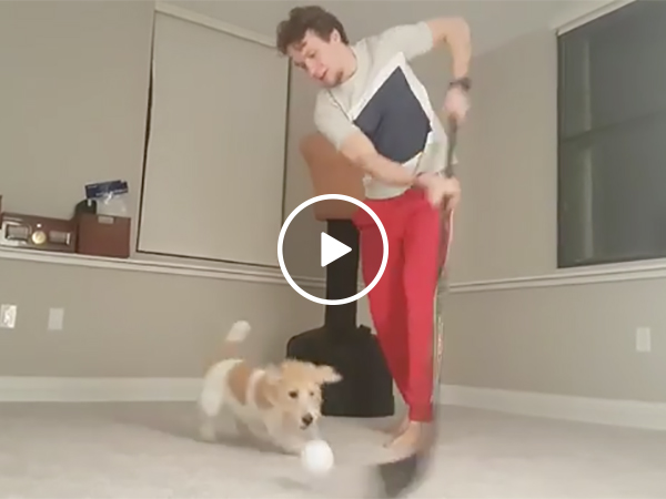 NHL Hockey Player Stick Handles A Ball Around His Dog