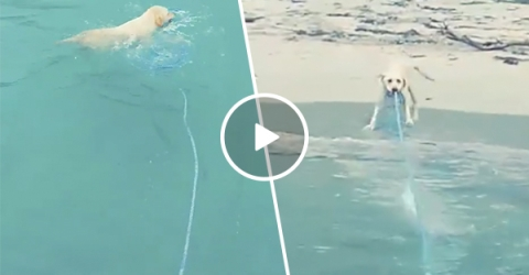 Strong dog pulls boat in from ocean (Video)