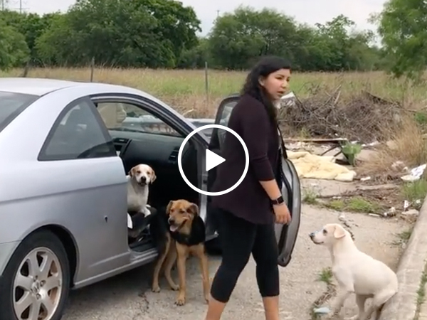 Piece of sh!t abandons a car full of dogs (Video)