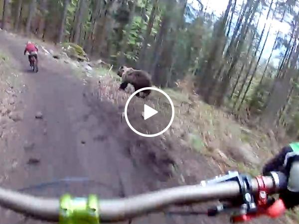 Intense helmet camera footage of bear charging mountain bikers (Video)