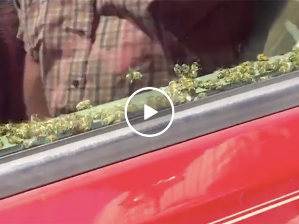 A Guy's Car Gets Filled With Bees and He Didn't Care