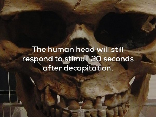 A collection of weird and creepy facts