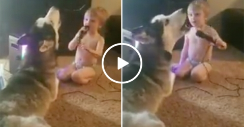 A Toddler And His Dog Rock Out And Sing a Duet