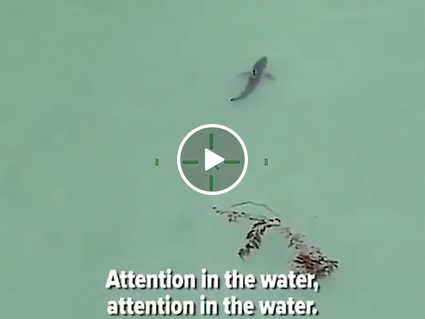 Paddle Boarders told to remain calm surrounded by 15 great whites