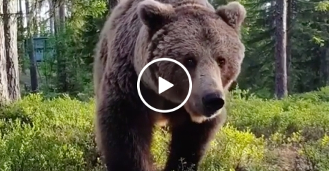 Camper Wakes Up To Massive Grizzly Bear Outside His Tent