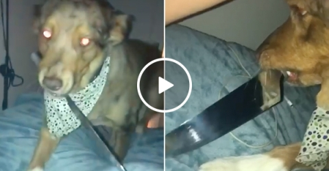 Good boy finds out who had him neutered... (Video)