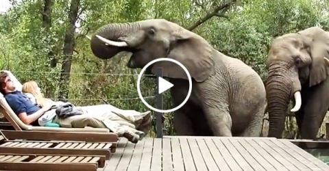 Tourists freeze as wild elephants make a surprise visit (Video)