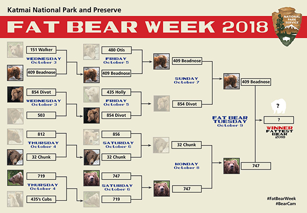fat bear week ends tonight who will be crowned heftiest of them all xx photos 2 Fat Bear Week ends tonight. Who will be crowned heftiest of them all? (7 Photos)