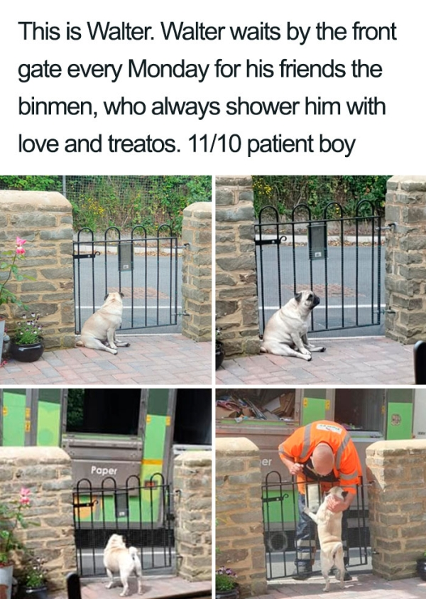 a litter of the best heckin dogs ever xx photos 1 Wholesome proof that we really do not deserve dogs (34 Photos)