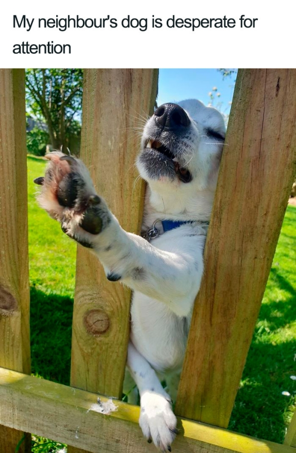 These Dogs Are The Best Boys Ever : Wholesome proof that we really do not deserve dogs (35 Photos)