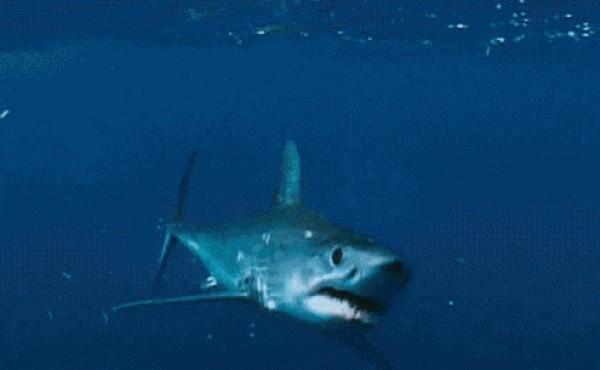 Живые картинки акулы