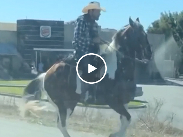 Dancing horse has the hooves with the moves (Video)