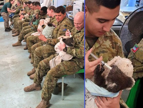 Koalas caught in the wild fires get a heart-warming hand from Australian Army (4 Photos)