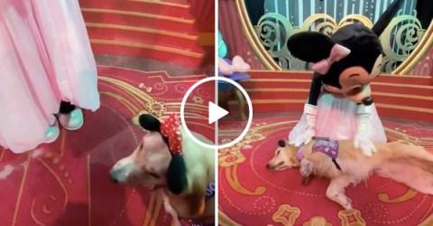 Same, Minnie mouse-adoring service dog, same (Video)