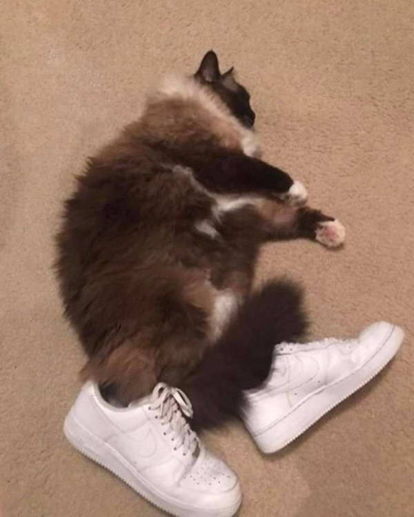 best cat saturdays of the year 98 photos 24 Best Photos of the Week! (100 Photos)