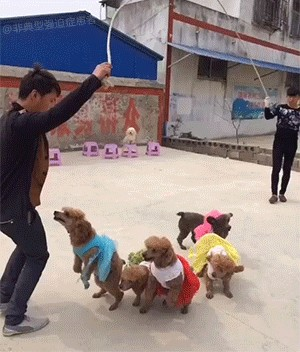 these pet tricks are seriously impressive 2 These pet tricks are seriously impressive (16 GIFs)