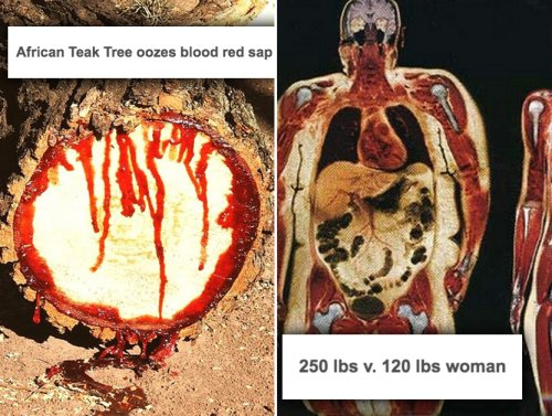 A mind-blowing look at things cut in half (34 photos)