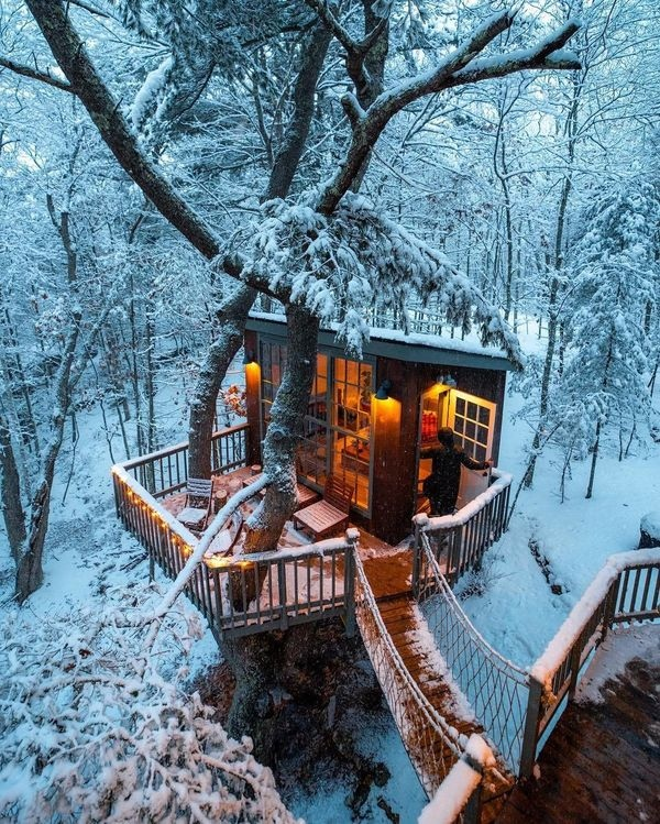 bd3b0123d990692b870ac3ae096e162b_width-600wtmk - Do you want to live in a tree house? - Photos Unlimited