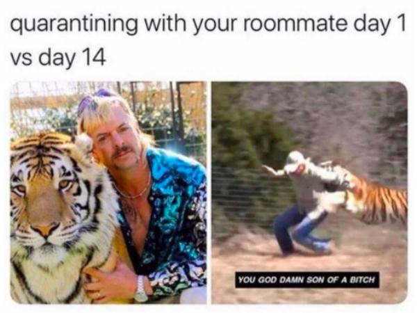 Unlike Carole Baskin, these 'Tiger King' memes didn't kill ...
