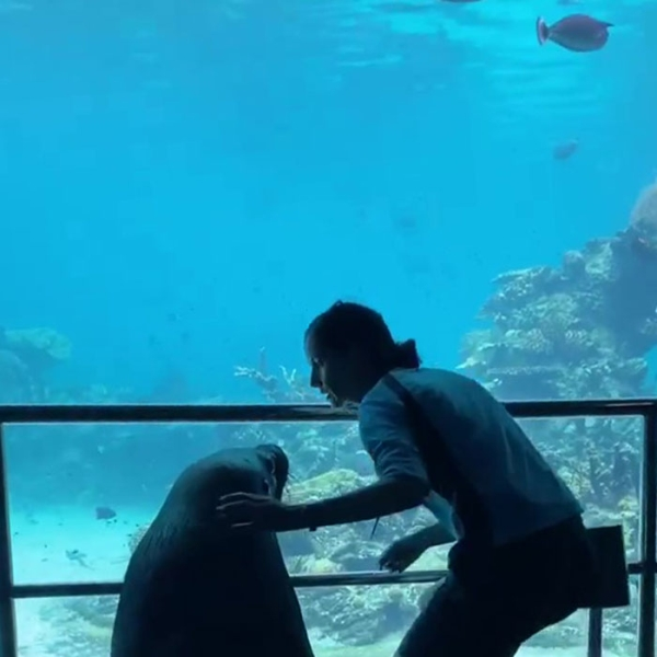 Animals Roaming Free In Zoos During Quarantine Humanity Interesting Beautiful Awesome 3 Sea World employee shows sea lion the adventure of a lifetime (24 Photos)