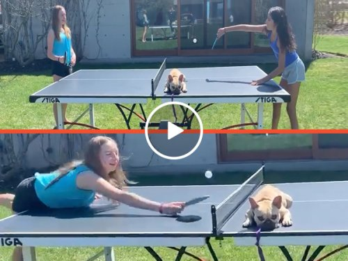 COVID, even the dogs have stopped giving a f-ck (Video)