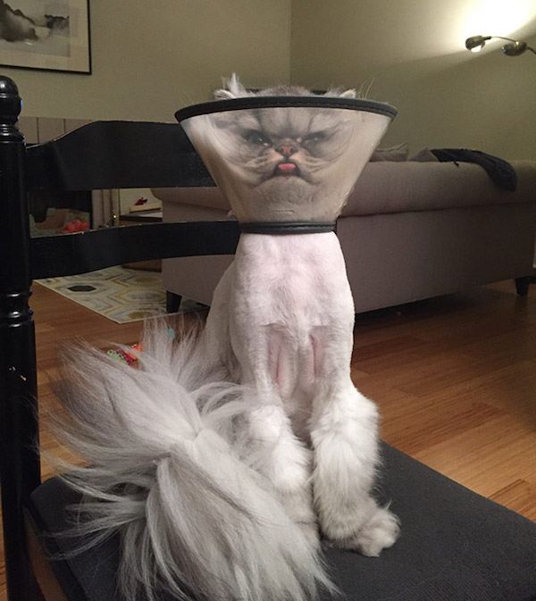 pets that have been defeated by the dreaded cone of shame x photos 1 Sad lampshades   pets that have been defeated by the cone of shame (36 Photos)