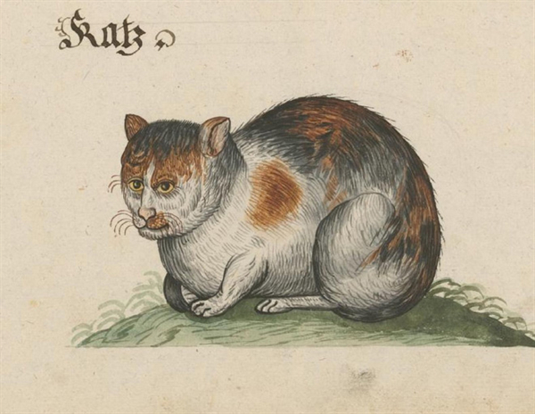 well never not laugh at medieval cats photos 9 Well never not laugh at Medieval Cats (25 Photos)