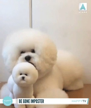 Some Animals Just Want To Watch The World Burn Funny GIFs Humor 00002 23 Some animals just want to watch the world burn (15 GIFs)