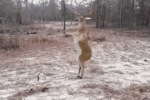 a deer stranded on an island has been there for over a year now 1 2 This lonely deer has been stranded on an island for a year