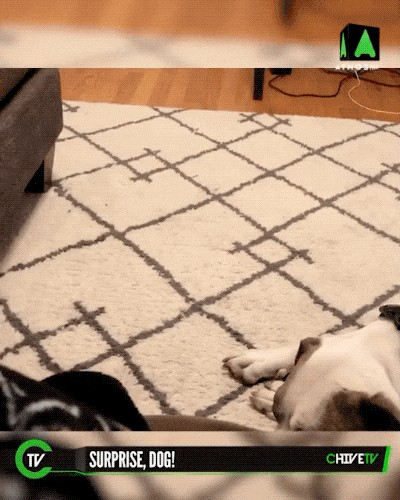 video 1 12 We definitely did not see that coming! (18 GIFs)