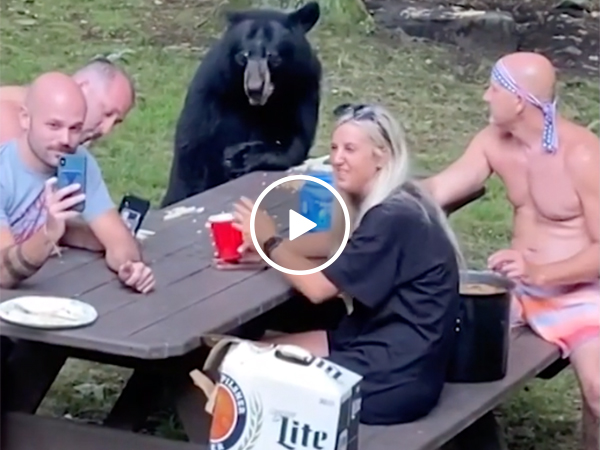 Darwin Award Nominees invite WILD BEAR to their lunch... (Video)