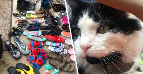 This cat is a thief, you gotta belief, he stole my shoes off my porch (20 Photos)