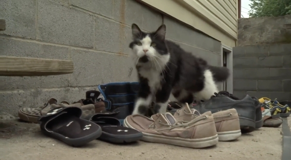 Instagram Cat @jordan the feline cat burglar Steals Shoes From Neighbors Humor Funny Pictures Animals 17 This cat is a thief, you gotta belief, he stole my shoes off my porch (20 Photos)