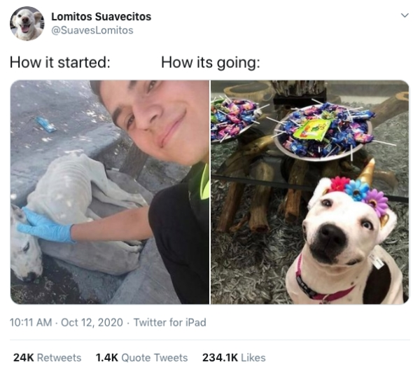 "How It Started Vs How Its Going Dog Rehab3 ""How it Started Vs. How it's Going"" dog rehab edition is good vibes all around (28 Photos)"
