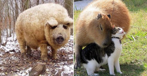 Crazy factoids that show just how incredible animals are (21 Photos)
