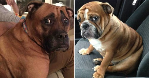 Pets that really know how to tug at our heartstrings (20 Photos)