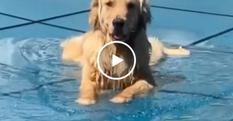 Adorable dog just wants his pool to be open (Video)