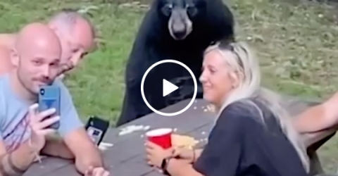 Nothing to see here but a family picnic with a black bear?! (Video)