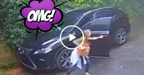 Bearly anyone expected THAT was in her Lexus (Video)